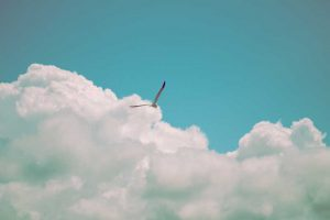 Bird flying: FREEDOM